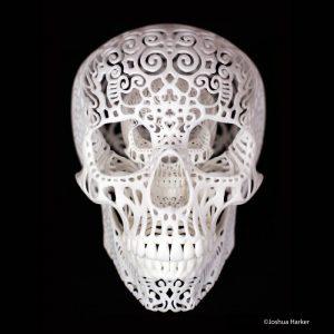craniaanatomicafiligrebinary_joshuaharker
