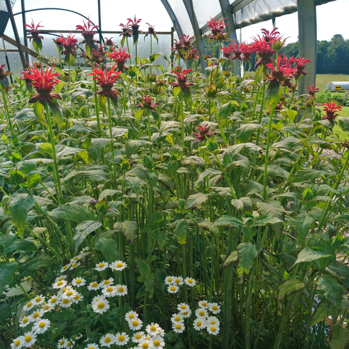 Pollinators: temporal capture idea